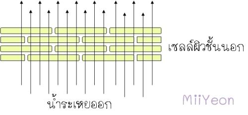 occlusive 3-e