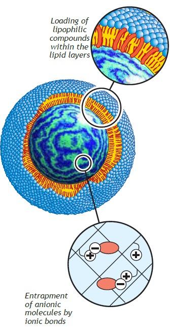 glycosphere.jpg