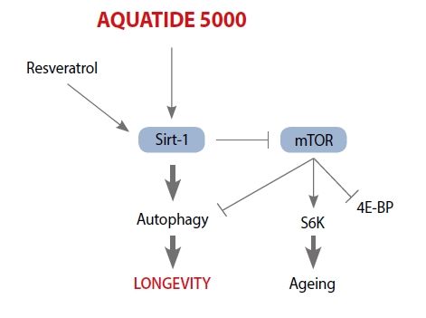 aquatide 2