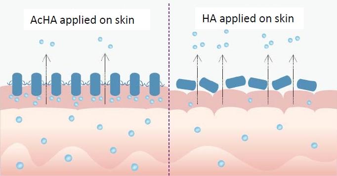 Hymagic 2