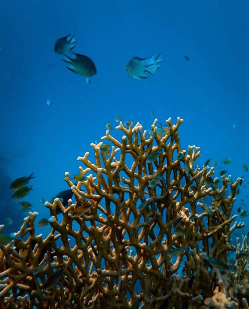 fishes near coral reef